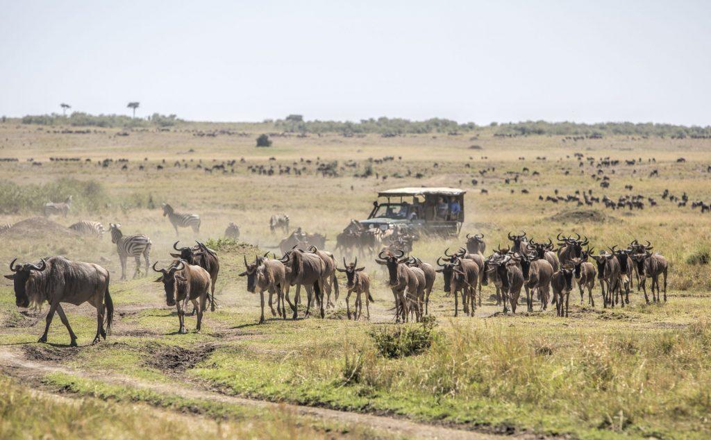 maasai-mara-safari 2