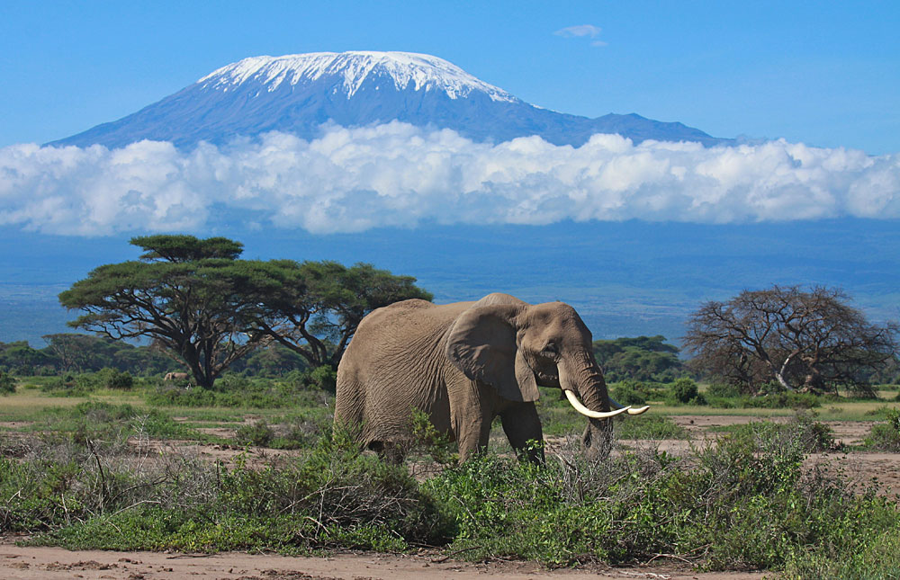 Amboseli_National_Park_033