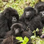 Top Thrilling things To Do On Safari in Bwindi