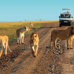 How to Plan For An Affordable African Safari